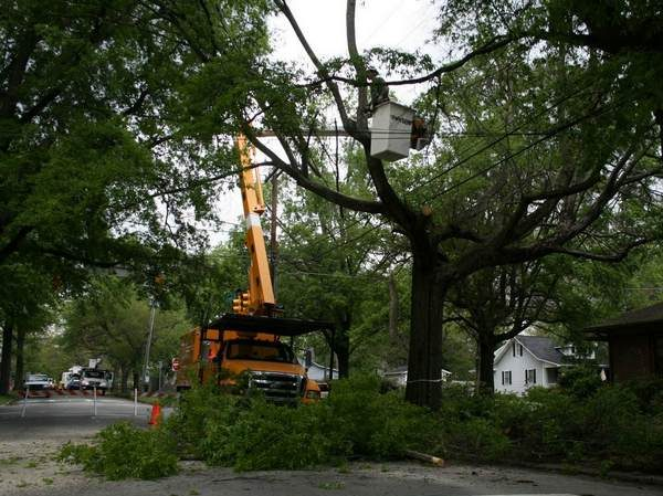 Picture of tree being removed in Fort Wayne