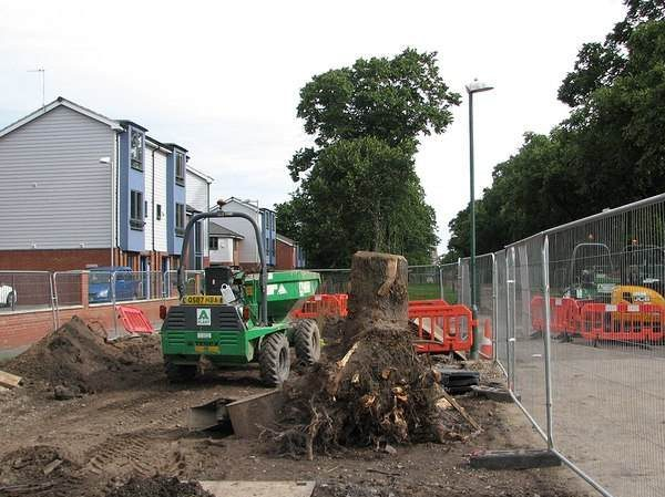 Fort Wayne stump removal service