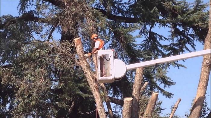 Fort Wayne tree cutting expert