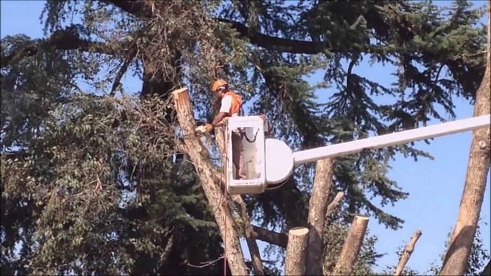 Fort Wayne tree cutting expert