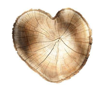 Picture of a heart-shaped stump representing Fort Wayne tree health