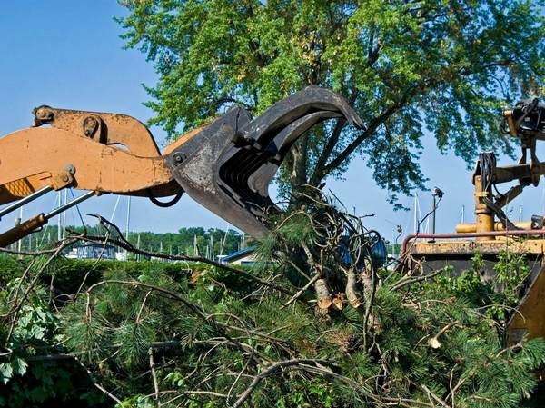 A picture of a tree removal equipment in Fort Wayne, Indiana