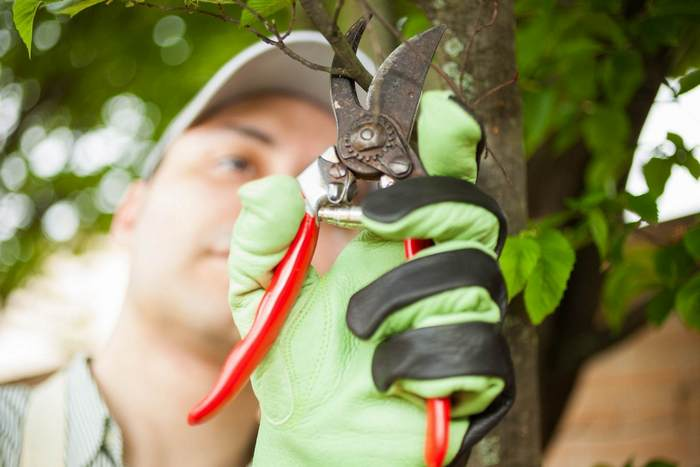 A picture of a tree trimmer in Fort Wayne, Indiana
